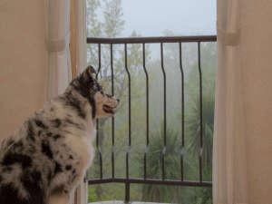 愛犬の宿 ラブリーワンズ:窓の向こうの森にはリスが