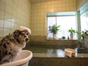 愛犬の宿 ラブリーワンズ:ワンちゃんも専用バスに入れる温泉