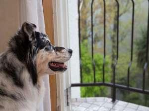愛犬の宿 ラブリーワンズ:緑に囲まれた静かなお部屋