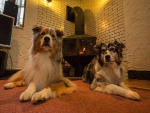 愛犬の宿 ラブリーワンズ:ワンちゃんと上質なひとときを