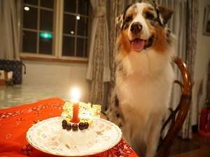 愛犬の宿 ラブリーワンズ:ワンちゃんの記念日プラン
