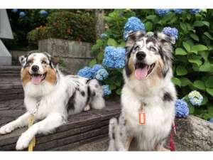 愛犬の宿 ラブリーワンズの写真