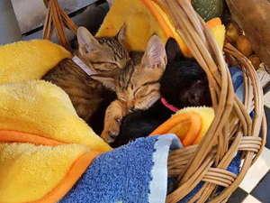 猫ちゃんおもてなしの宿    オーベルゼ    レ・ボー