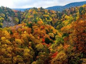 <白布の秋>西吾妻スカイバレー(赤滝黒滝)