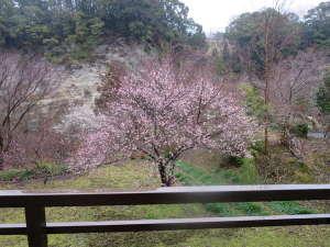 渓流の宿 福水:「みずき」の客室から見る紅梅。