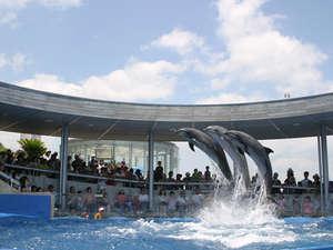90種、1500尾の魚が泳ぐ「大回遊水槽」をはじめ、海の中で過ごしている気分になれる「うみたまご」
