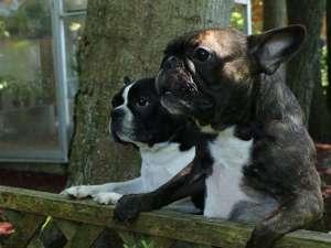 あさりのお宿:あさりのお宿の看板犬達です♪