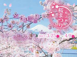 御殿場高原リゾート 時之栖(ときのすみか):[時之栖 桜まつり]2017年3月25日(土)~4月9日(日) 300Mの桜のトンネルを是非ご鑑賞ください!