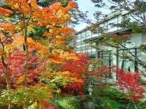 草津温泉 ホテル櫻井:【景観】紅葉の庭園(11月上旬頃)