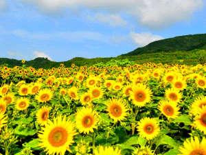 ウェスティンホテル淡路:国営明石海峡公園の夏(イメージ)