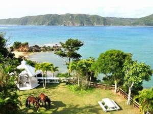 やんばるロハス:庭の目の前に広がる海。敷地内では馬も飼っています。