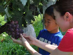 木津館:丹後の美味しいもぎたてのフルーツをお召し上がりください♪