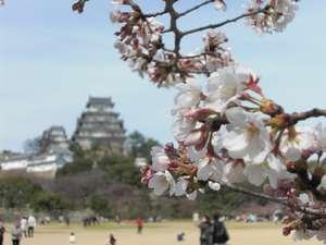桜開花の姫路城