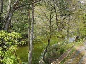 湯屋温泉 炭酸泉の宿 泉岳舘:お部屋の窓越しに見える木々 川底見える清流からのさわやかな風が気持ちいい!