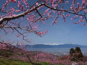 ホテル春日居:≪春の絶景≫南アルプスを背に咲く桃の花。見ごろは4月上旬から中旬です♪