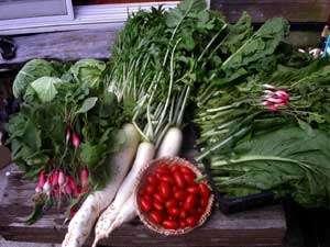 アマミアンスタイルペンション グリーンヒル:旬のお野菜