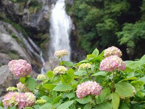 あじさいの宿 都荘:見帰りの滝とあじさい