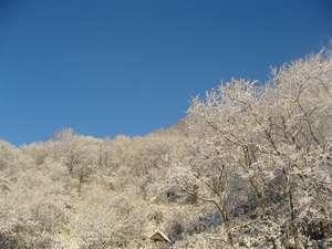 うたしないチロルの湯:冬の朝チロルの森はもきれいな青空と一緒です。