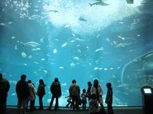 大洗ホテル~太平洋を望む絶景ロケーション~:大水槽は迫力満点! アクアワールド大洗