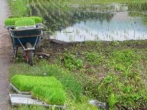 蔵やしき野の花畑:日帰り温泉施設「まんてん星の湯」周辺までウォーキング