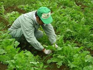 農園レストラン&ペンション レインボーヒルズ:自家菜園にこってます。安全でおいしい野菜を提供しますよ!