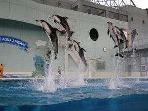 横浜・八景島シーパラダイス。イルカのショーをお楽しみください。