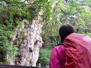 RAKUSAホテル:縄文杉や白谷雲水峡のトレッキングがセットになったお得なプラン「RAKUSAパック」