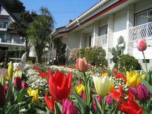 ペンションストロベリー:ストロベリーの花壇にはチューリップが満開!!