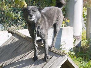 *【看板犬】当施設看板犬と楽しくお散歩しませんか?