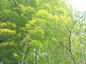 木もれびの宿 ふるさと