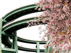 七滝地区にも沢山の河津桜がございます。