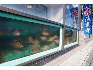 浜の漁師居酒屋/活魚の宿 こちら丸特漁業部 :【大型いけす】「新鮮」で「活魚が安い」秘訣♪注文が入るまで、いけすでスイスイ泳いでいます◎