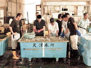 地元の漁港から新鮮な地魚を仕入れています