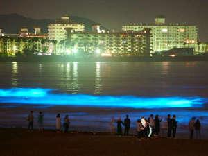 KKR鎌倉わかみや(国家公務員共済組合連合会鎌倉保養所):海のオーロラ【夜光虫】が青く輝き幻想的な由比ヶ浜