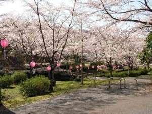 天然温泉 広島北ホテル:桜の名所 土師ダムまで車で15分♪