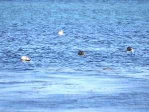アザラシの見える宿 礼文島スコトン岬:天気のいい日はお部屋からあざらしが見えることも・・・!