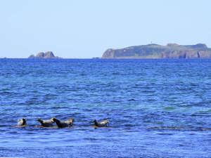 アザラシの見える宿 礼文島スコトン岬:宿からはアザラシを眺めることもできます