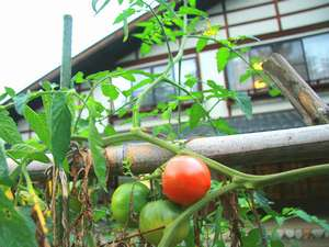 駒ヶ根ふるさとの家:■自家農園で育った野菜のみずみずしさを堪能できます