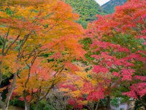 丸山公園紅葉