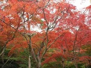 有馬温泉 有馬グランドホテル:かの太閤秀吉も愛した有馬が誇る紅葉の名所「瑞宝時公園」11月上旬~中旬には[もみじツアー]もございます。