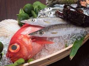 *近海で獲れた鮮度にこだわりのある魚介類をお楽しみください。