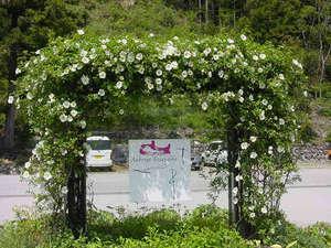 エントランス前に建つ、ナニワイバラのアーチ。5月初旬、真っ白な花で縁どられます。