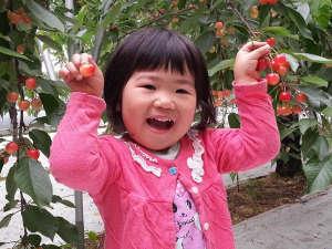 仙台・作並 La楽リゾートホテル グリーングリーン:さくらんぼ狩りはお子様でも手の届く木がございます