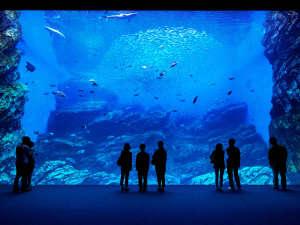 仙台・作並 La楽リゾートホテル グリーングリーン:チケット引換券付プランが大好評!うみの杜水族館の大水槽『いのちきらめくうみ』