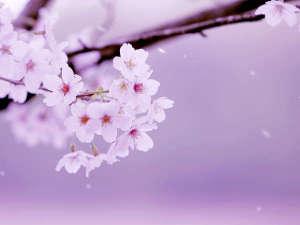花の宿福寿