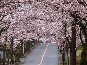 伊豆 全室露天風呂付き客室 ほまれの光 水月:伊豆高原 桜並木