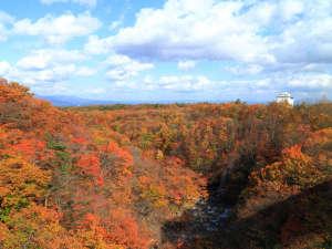 八幡平ロイヤルホテル:【紅葉】森の大橋から望む紅葉。ホテルより徒歩で約15分