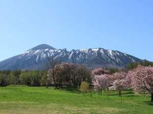アクティブリゾーツ 岩手八幡平(旧:八幡平ロイヤルホテル):残雪残る岩手山と桜。県民の森では、こんな景色が楽しめます。例年見頃はGWと重なります。