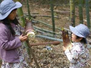 箱根強羅温泉 にごり湯の宿 桐谷箱根荘:子供達と庭で、竹の子掘りを楽しんでます。