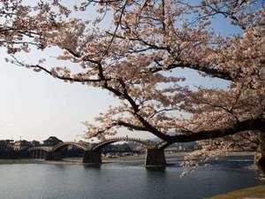 春は桜の名所にもあげられる錦帯橋
